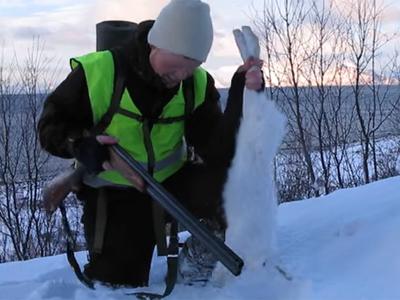 Jakttur til Arnøya