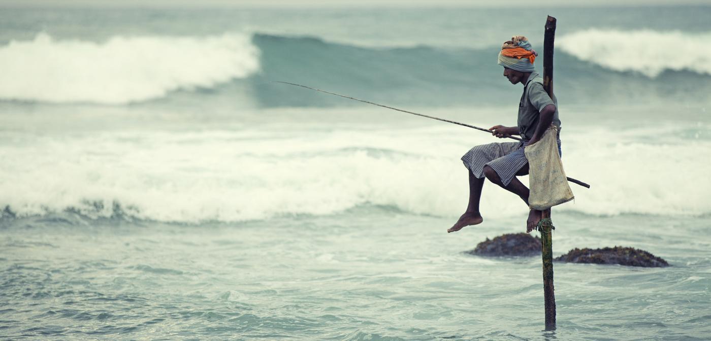 Fisker - Global utvikling