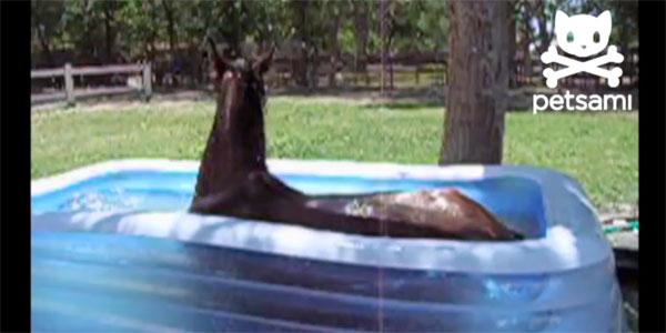 Hest bader i barnas basseng i hagen!