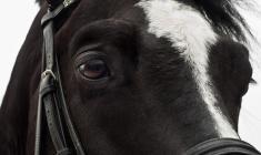 Treningsrelaterte skader på hest - Kan det forebygges?