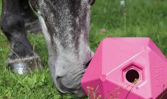Hesteleker gir din firbente venn timesvis med underholdning
