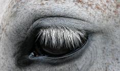 NRYF sin uttalelse om Falsterbo-saken: Hestevelferd er alltid det viktigste