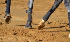 Unngå overoppheting og seneskader ved bandasjering av hestebein