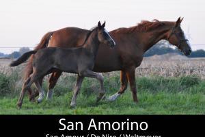 SAN AMORINO
