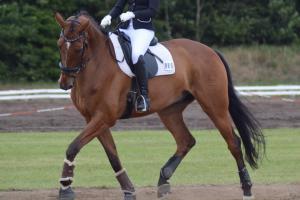 PSG hest