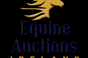 Equine Auctions Ireland Amateur and Leisure Horse Collection