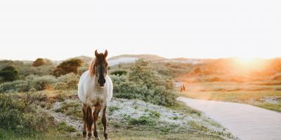 Hva slags ormekur bør hesten få om høsten? Veterinæren svarer