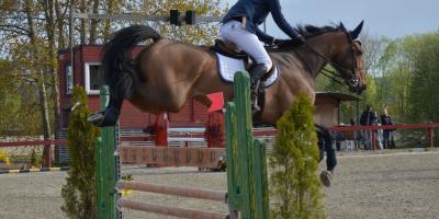 Kan man se forvarsler på overtrening hos hester?