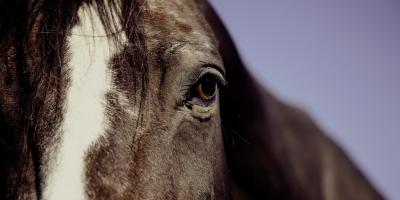 Hjertefeil - Ikke uvanlig lidelse hos hest