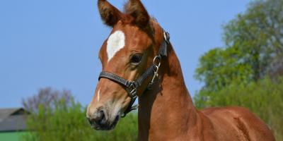 Exceptional foals at Nordic International Sales
