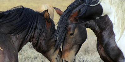 Smittsomme hestesykdommer - nå må alle hesteeiere passe på!