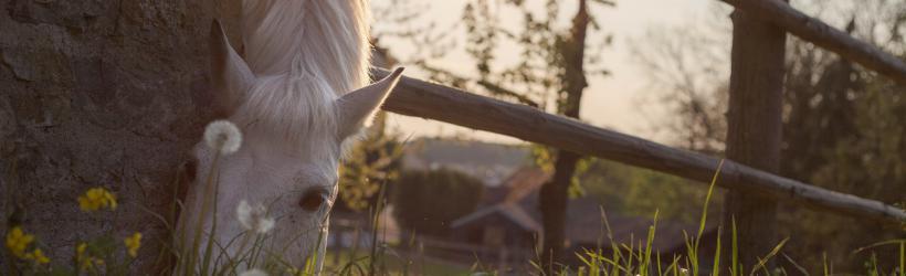 Ta vare på hesten i sommervarmen!