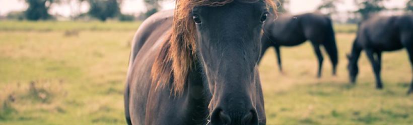 Hva vil det si at hesten er i godt eller optimalt hold? Finn ut hvor din hest er på holdskalaen